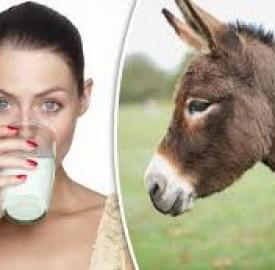 درمانهای وابسته به شیر الاغ از شایعه تا واقعیت !