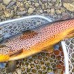 قزل آلا بهترین ماهی توصیه شده به بیماران دیابتی !