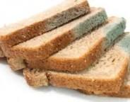 کپک و عوارضی که مصرف نان کپک زده دارد ؟