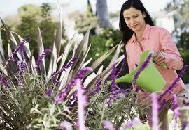 مراقبت از گیاهان آپارتمانی و قواعد نگهداری از آنها