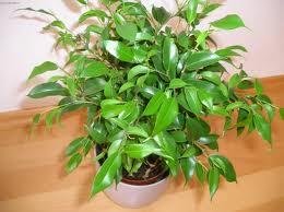 گیاهان مناسب برای نگهداری در آپارتمان