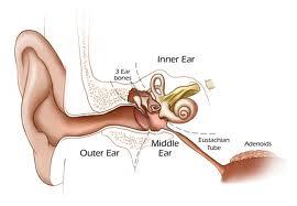 گوش عضو حساسی از بدن با تنوع عارضه
