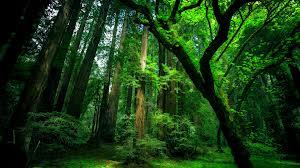 از جنگل های شگفت انگیز تا شاهکارهای دست طبیعت