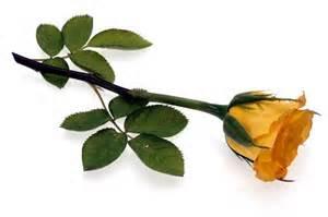 گل های شاخه ای را تا چند هفته نگهدارید