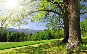 طبیعت و هوای پاک حق مسلم نسل های آینده