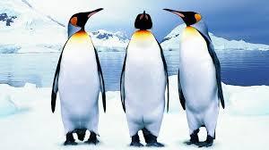 پنگوئن پرنده ای ناتوان در پرواز ولی شناگری ماهر !