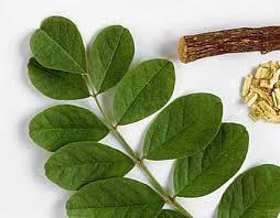 شیرین بیان و رویش این گیاه دارویی در اکثر نقاط ایران