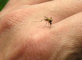 آیا می دانید حشرات در فصل های پاییز و زمستان کجا می روند ؟!!