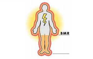 محاسبه BMR و کالری مورد نیاز روزانه در بدن زن و مرد