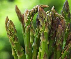 گیاه مارچوبه و اهمیت استفاده از آن در رژیم غذایی