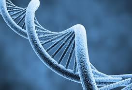 ژن درمانی راه حلی مؤثر در درمان دیابت و چاقی !