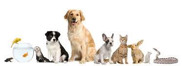 حیوان خانگی و تأثیرات آن در داشتن روحیه ای شاد !