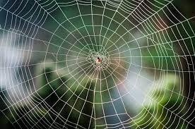 آیا با قابلیت ترمیمی تار عنکبوت آشنایی دارید ؟