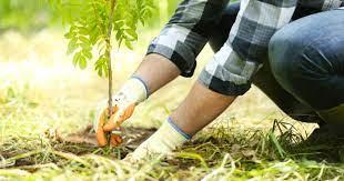کاشت درخت و لزوم دانستن نکاتی در این باره