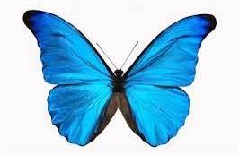 پروانه نمادی با ویژگی های قدرتمندانه و خاص !